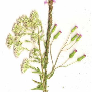 Una imagen explorada aseada de flores