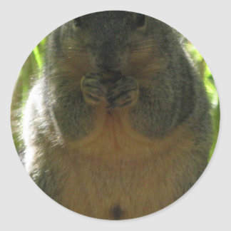 Una imagen linda, adorable de la ardilla pegatina redonda