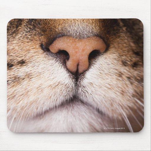 Una imagen macra de la nariz y de la boca de un alfombrillas de ratones