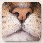 Una imagen macra de la nariz y de la boca de un posavasos