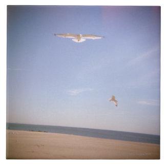 una imagen soñadora de las gaviotas que vuelan en  azulejos