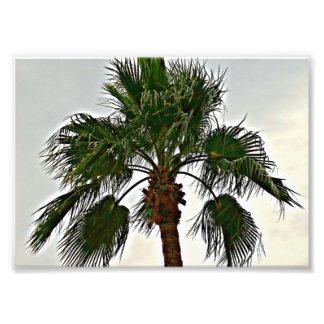 Una impresión de la foto de la palmera