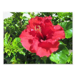 Una impresión roja de la foto del hibisco