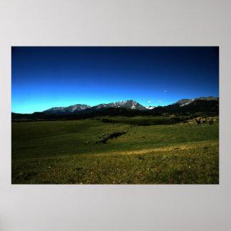 Una impulsión del ganado de Montana Póster