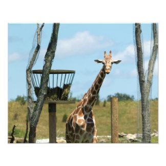 Una jirafa en una tarde soleada fotografía