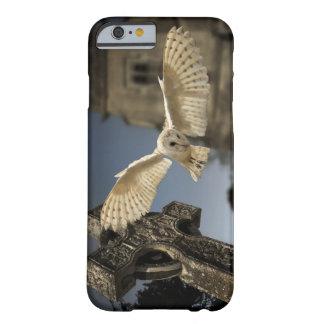 Una lechuza común (Tyto alba) en un cementerio en Funda De iPhone 6 Barely There
