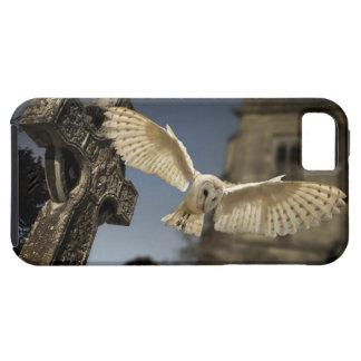 Una lechuza común (Tyto alba) en un cementerio en Funda Para iPhone 5 Tough