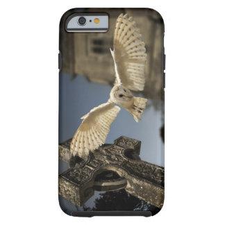 Una lechuza común (Tyto alba) en un cementerio en Funda Para iPhone 6 Tough