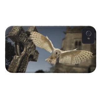 Una lechuza común (Tyto alba) en un cementerio en iPhone 4 Case-Mate Protector
