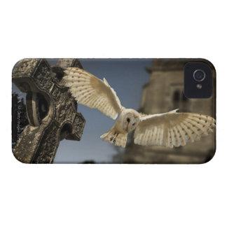 Una lechuza común (Tyto alba) en un cementerio en iPhone 4 Coberturas