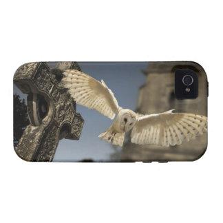 Una lechuza común (Tyto alba) en un cementerio en iPhone 4 Fundas