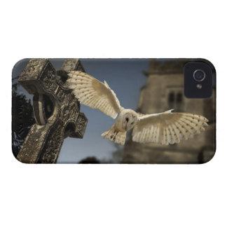 Una lechuza común (Tyto alba) en un cementerio en iPhone 4 Protectores