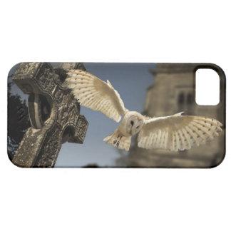 Una lechuza común (Tyto alba) en un cementerio en iPhone 5 Fundas