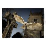 Una lechuza común (Tyto alba) en un cementerio en Tarjeta De Felicitación