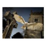 Una lechuza común (Tyto alba) en un cementerio en Tarjeta Postal