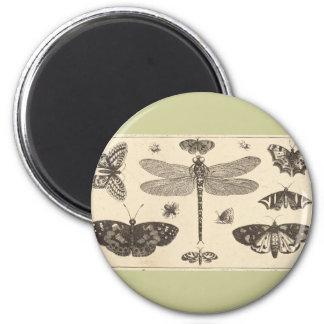 Una libélula, mariquitas, y mariposas iman de nevera