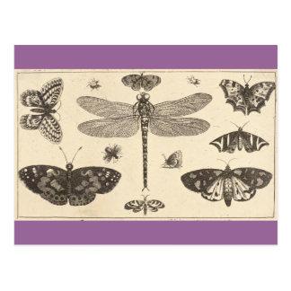 Una libélula, mariquitas, y mariposas tarjeta postal
