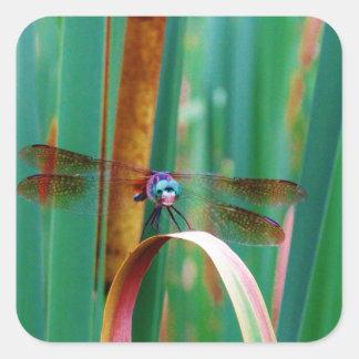 Una libélula observada trullo con cattails pegatina cuadrada