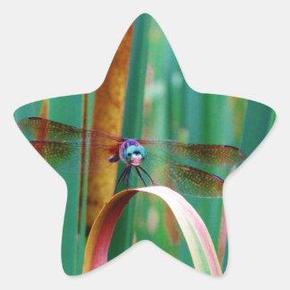 Una libélula observada trullo con cattails pegatina en forma de estrella
