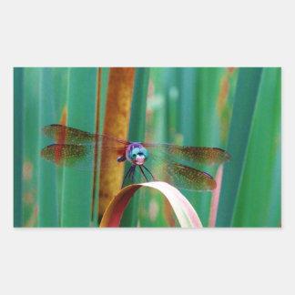 Una libélula observada trullo con cattails pegatina rectangular