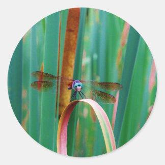 Una libélula observada trullo con cattails pegatina redonda