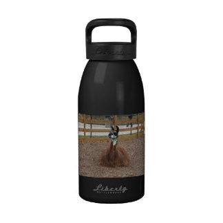Una llama mullida de Brown que coloca en pluma del Botellas De Agua Reutilizables