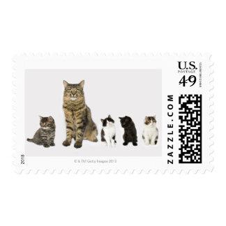 Una madre con sus cuatro gatitos toda la sentada sellos