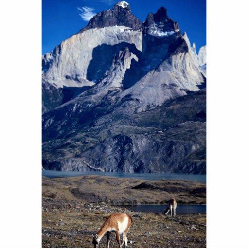 Una manada de guanacos, parque nacional de Torres  Esculturas Fotográficas