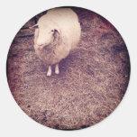 una manada de lobos de las ovejas pegatina redonda