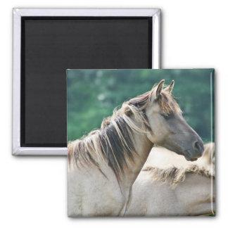 Una manada de los caballos de Brumby de Australia Imán Cuadrado