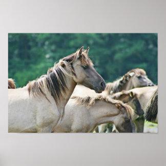 Una manada de los caballos de Brumby de Australia Póster