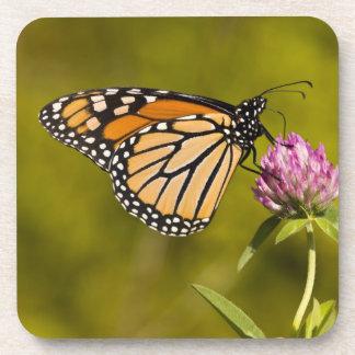 Una mariposa de monarca, plexippus del Danaus, en  Posavasos