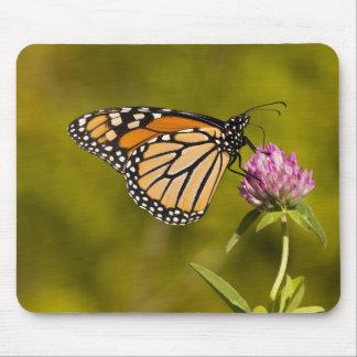 Una mariposa de monarca plexippus del Danaus en Tapete De Ratones
