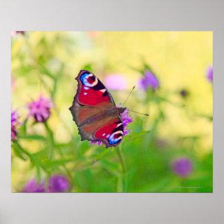Una mariposa de pavo real brillantemente coloreada póster