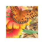 Una mariposa espectacular en mi Gaillardia Pulchel Impresiones En Lona
