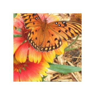 Una mariposa espectacular en mi Gaillardia Pulchel Lona Estirada Galerias