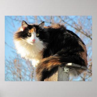 Una mejor foto del gato de calicó de la visión póster