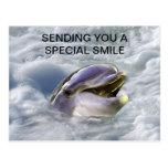 Una mejor sonrisa de los delfínes postal