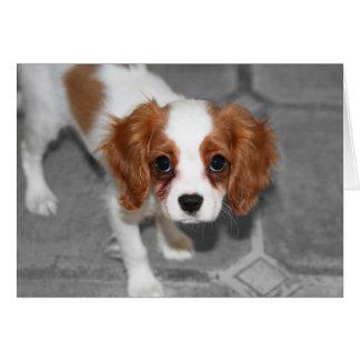 Una mejor tarjeta arrogante del perro de aguas de