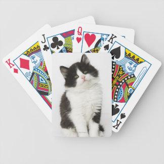 Una mirada que se sienta del gatito joven en la cá barajas de cartas