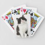 Una mirada que se sienta del gatito joven en la cá cartas de juego