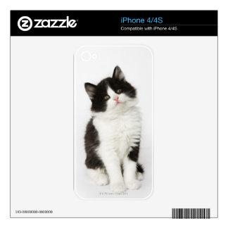 Una mirada que se sienta del gatito joven en la calcomanías para iPhone 4S