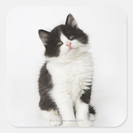 Una mirada que se sienta del gatito joven en la pegatina cuadrada