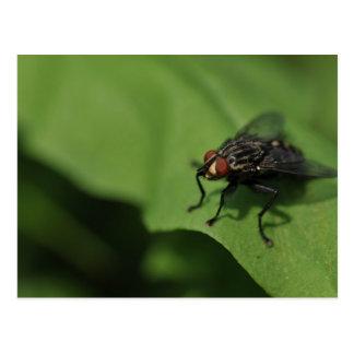 Una mosca doméstica en una hoja verde tarjeta postal