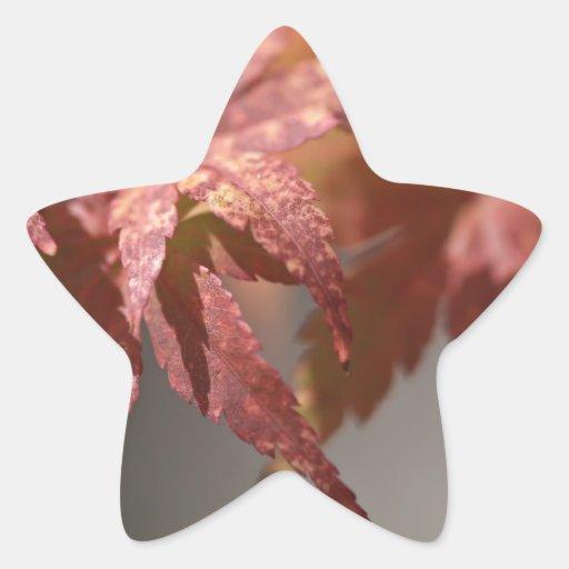 Una muestra de la caída pegatina en forma de estrella
