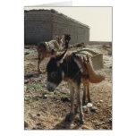 Una mula en descanso en tarjeta de cumpleaños de M