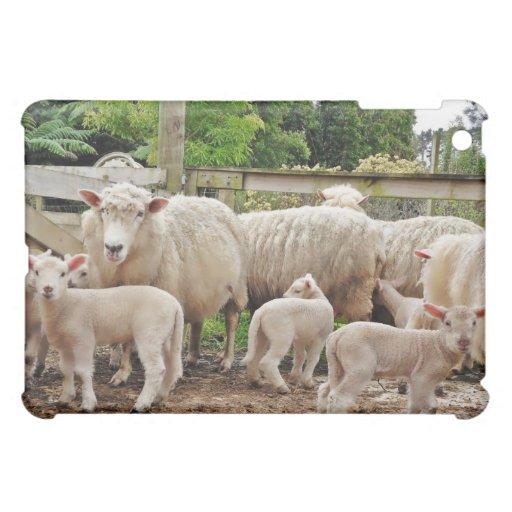 Una multitud de ovejas en la granja