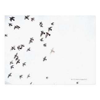 Una multitud de pájaros está volando en el cielo postales