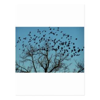una multitud de pájaros tarjeta postal