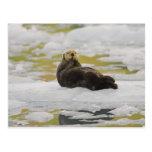 Una nutria de mar descansa sobre un pequeño iceber postal